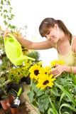 może ogrodnictwa dolewania wody podlewania kobieta Zdjęcie Royalty Free