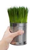 może trawy zieleni metal Zdjęcia Stock