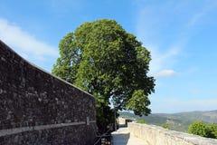 Możny drzewo za kamienną ścianą obraz royalty free