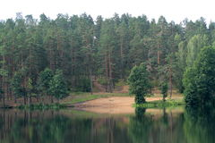 Możny las obrazy stock