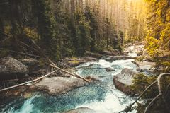 Możny rzeczny spływanie przez lasu, Tatras obraz stock