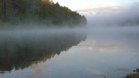 Możny zielony las odbija na rzecznym krysztale - jasna woda zbiory