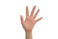 Mão aberta da esquerda da jovem senhora Fotografia de Stock
