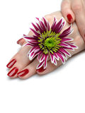 Mão bonita com manicure perfeito do vermelho do prego Fotos de Stock Royalty Free