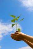 Mão com uma planta verde em um fundo do céu Fotografia de Stock Royalty Free