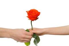A mão do homem que dá a rosa do vermelho a uma mulher Fotografia de Stock
