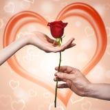 Mão do homem que dá uma rosa a uma mulher Imagens de Stock Royalty Free