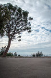 Możny drzewny trwanie samotny Obrazy Royalty Free