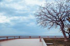 Możny drzewny trwanie samotny Obraz Royalty Free