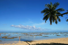 Mo'oreaparadijs in Franse Polynesia Stock Fotografie