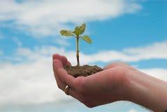 Mão + planta Foto de Stock