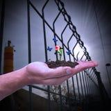 Mão que guarda um botão da rosa Conceito da vida, do nascimento, do renascimento e da esperança novos; ecologia Fotografia de Stock Royalty Free