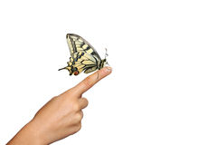 Mão que prende uma borboleta Foto de Stock Royalty Free