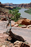 Moab, Utah och Coloradofloden Royaltyfria Foton