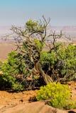 Moab Utah, voûtes et parcs nationaux de Canyonlands Images libres de droits