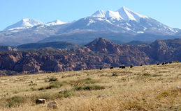 Moab-Wüsten-Ranch Lizenzfreies Stockbild