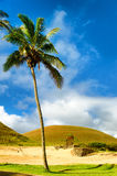 Moai at Anakena Beach. Palm tree towering over Moai at Anakena Beach on Easter Island in Chile Royalty Free Stock Photography