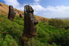 Moai on Easter Island Royalty Free Stock Photo
