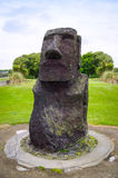 Moai sculpture in the afternoon sun Stock Photography