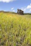 Moais bak grönt gräs Arkivbild