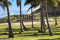 Moais bak palmträd Arkivfoton