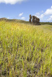 Moais behind green grass. In Easter Island stock photography