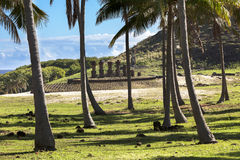 Moais behind palm trees. In Easter Island stock photos