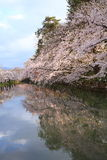 Moat and cherry blossoms Royalty Free Stock Photography