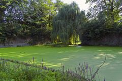 Moat overgrown with duckweed at the wall of the old fortress stock images