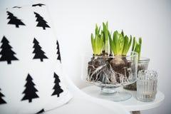 Mobília minimalista e jacintos Imagem de Stock