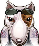 Mob terrier. Funny illustration of angry bull terrier with tattoos as a street fighter drawn in cartoon style Stock Image