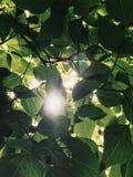Mobiele foto die van zon door de bladeren glanzen Stock Foto