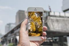 Mobil-, intelligentes Telefon mit Naturbild und Stadt am Hintergrund, Naturmobile stellten 1 ein Stockfotos