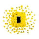 Mobil mądrze telefon otaczający żółtymi dandelions kwitnie na bielu Zdjęcia Stock