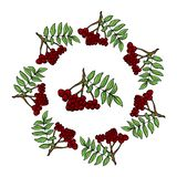 Wreath of ashberry vector illustration