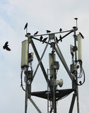 Mobile antenna with birds Stock Images