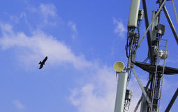 Mobile antenna with eagle Royalty Free Stock Photography