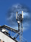 Mobile Antenne Stockbild