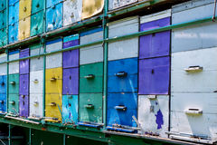 Mobile apiary royalty free stock image