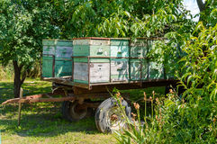 Mobile apiary-trailer at forest. Old mobile apiary-trailer at forest in waiting for bees royalty free stock image