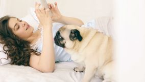 Mobile cellphone social media using in the bed. Woman with funny pug dog. Video footage. Home sunny weekend stock video