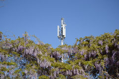 Mobile communication antennas. And flowering acacia Royalty Free Stock Photos