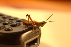 Mobile grasshopper. Grasshopper sitting on mobile phone Royalty Free Stock Images