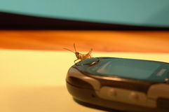 Mobile grasshopper-2. A grasshopper sitting on mobile phone Royalty Free Stock Images