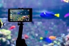 Mobile phone in Aquarium stock photo