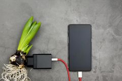 Mobile phone charging from a flower bulb stock photo