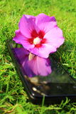 Mobile phone. Mobilephone in nature Royalty Free Stock Image