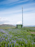 Mobile phone telecommunication radio antenna tower. In a summer blooming field. Concepts: communication, environment, nature, electromagnetic pollution. Iceland stock photos