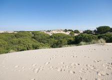 Mobile sand dunes, Doñana, Spain Stock Photos