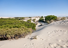 Mobile sand dunes, Doñana, Spain Royalty Free Stock Images